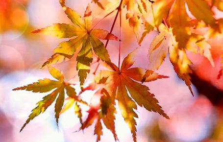 Autumn 2017 - Tax Briefing